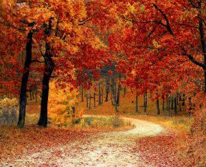 automne-beattitudes