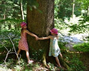 le-coeur-des-arbres-beattitudes