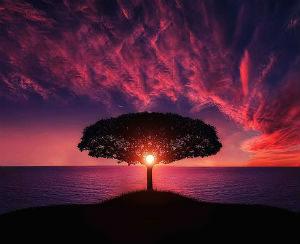 numerologie-arbre-personnel-beattitudes
